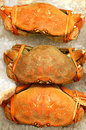 Crabs on ice in a fish market Royalty Free Stock Image
