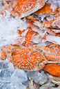 Crabs ice tray fish matket Stock Photos