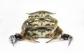 Crabs in isolated white background Royalty Free Stock Image