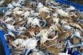 Crabs market Stock Image