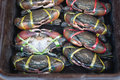 Crabs on market in bangkok Royalty Free Stock Photo