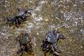 Crabs On Seashore