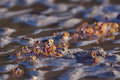 Crabs small in the wet sand closeup Royalty Free Stock Photography
