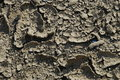 Crack dry soil Stock Image