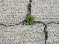 Crack in eroding concrete with weeds growing in cracks Royalty Free Stock Photo