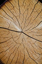 Crack wood spiral Stock Photos