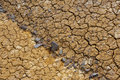 Cracked dry ground texture Stock Photography