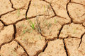 The cracked earth Royalty Free Stock Photo