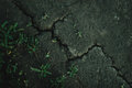 Cracked earth, weather without rain Royalty Free Stock Photo