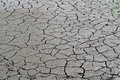 Cracked ground soil salinity ecological disaster dead fish Stock Image