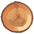 Cracked oak split with bark Royalty Free Stock Photo