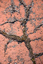 Cracked painted asphalt Stock Photo