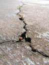 Cracked road with new life Royalty Free Stock Photo