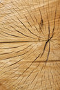 Cracked wood texture Royalty Free Stock Photography