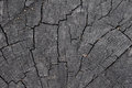 Cracked wood texture close up wooden background Royalty Free Stock Image