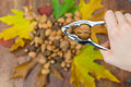 Cracking walnut
