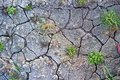 Crackled soil with natural texture Stock Images