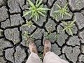 Cracks in mud due to drought Royalty Free Stock Photo
