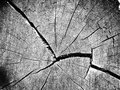 Cracks wooden on log section Royalty Free Stock Image