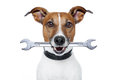 Craftsman dog Royalty Free Stock Image