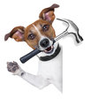 Craftsman dog with hammer in mouth beside a white blank banner Royalty Free Stock Images