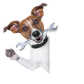 Craftsman dog with spanner wrench in mouth beside a white blank banner Royalty Free Stock Photography