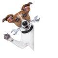 Craftsman dog Royalty Free Stock Photo