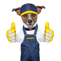 Craftsman dog with two thumbs happy to help Stock Photo
