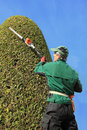 Craftsman trimming thuja with hedge clippers professional gardener precision work in a topiary garden side view Royalty Free Stock Photo