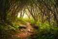 Craggy Gardens Appalachian Hiking Trail Fog Spooky Royalty Free Stock Photo