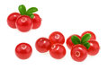 Cranberries isolated on white background Royalty Free Stock Photo