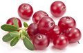 Cranberries with leaves. Stock Photography