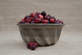 Cranberries in metal mold with loose berries fresh red and maroon heaped silver toned vintage bowl or food several outside of the Royalty Free Stock Images