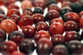 Cranberries - Selective Focus Stock Photos