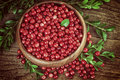 Cranberries Vintage Style Royalty Free Stock Photo