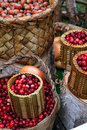 Cranberry in basket Royalty Free Stock Photography