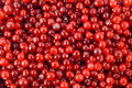 Cranberry berry Stock Photography