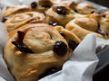 Cranberry bread freshly baked tray of Royalty Free Stock Photo