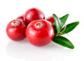 Cranberry in closeup isolated on white background Royalty Free Stock Photo