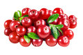 Cranberry isolated on white with clipping path background Royalty Free Stock Image