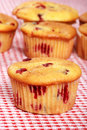 Cranberry muffin Royalty Free Stock Image