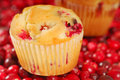 Cranberry muffin Stock Photography