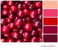 Cranberry Palette Royalty Free Stock Photos