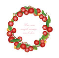 Cranberry round frame isolated on white background berry garland ripe red cranberries with leaves vector illustration Royalty Free Stock Photo