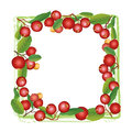 Cranberry round frame isolated on white background square shaped berry garland ripe red cranberries with leaves vector Royalty Free Stock Photography