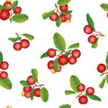 Cranberry seamless background ripe berry with leaves garland vector border Stock Image