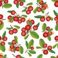 Cranberry seamless background ripe red cranberries with leaves vector illustration border berry garland Royalty Free Stock Images
