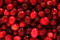 Cranberry texture red full frame Stock Photos