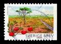 Cranberry (Vaccinium oxycoccus), Store Mosse National Park, National Parksserie, circa 2009