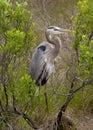 Crane Bird Standing